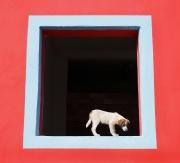 Щенок в окне